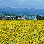 オーガリ(北海道)