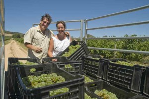 Jeremy & Emma in Southern cross vineyard