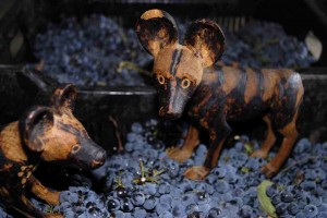wild dogs stomping grapes